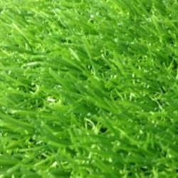 cỏ nhân tạo sân vườn 25l4yjx32